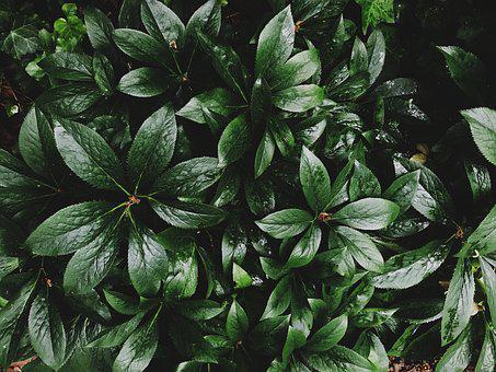 Leaves, Foliage, Green, Nature, Forest, Garden, Tree