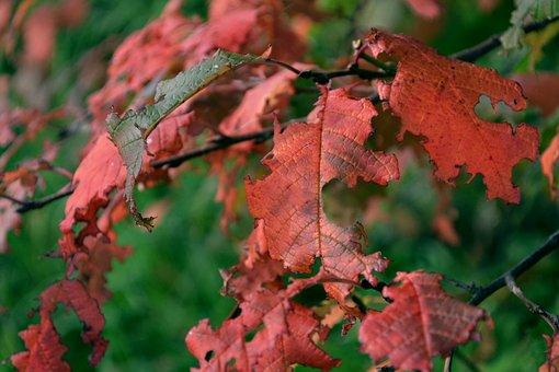 Nature, Autumn, September, Tree, Trees, Living Nature