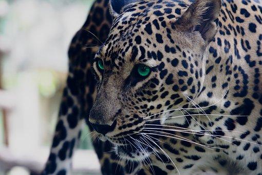 India, Maharashtra, Aurangabad, Wild, Wildlife