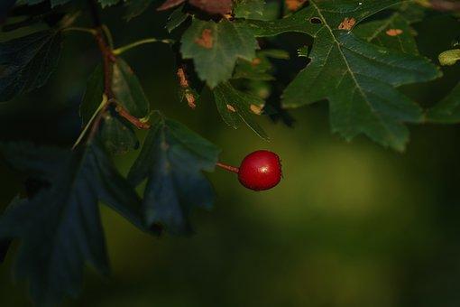 Beetroot, Fruit, Nature, Red, Autumn, Garden