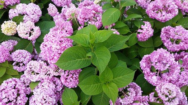 Flower, Flora, Nature, Leaf, Floral, Garden, Blooming