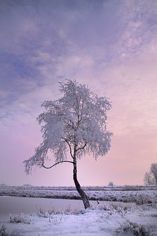 Winter Tree, Snow, Winter, Nature, Cold, Tree, Wintry