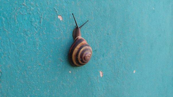 Snail, Nature, Sea Shells, Molluscum, Shell