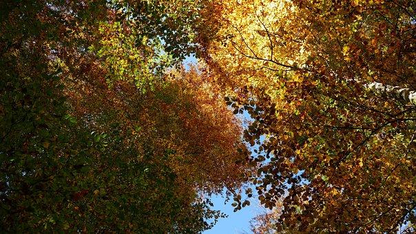 Nature, Landscape, Autumn, Leaves, Trees, Sun