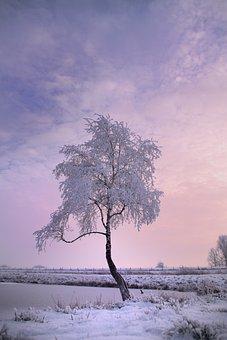 Winter Tree, Snow, Winter, Nature, Cold, Tree, Wintry