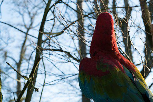 Bird, Parrot, Colorful, Exotic, Animal, Zoo, Park