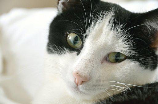 Cat, Pet, Black And White Cat, Young Cat, Animal, Paw