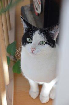 Cat, Animal, Pet, Mieze, Domestic Cat, Young Cat
