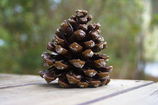 Pine Cones, Pine, Tap, Nature, Decoration, Tree, Pinus