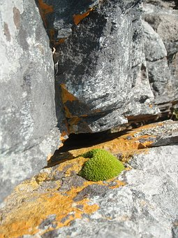 Nature, Stone, Rock, Of Course, Weave, Moss