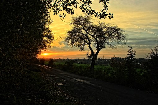 Sunset, Tree, Field, Road, Twilight, Landscape, Sky
