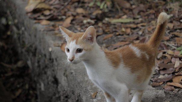 Cat, Pet, Two Color
