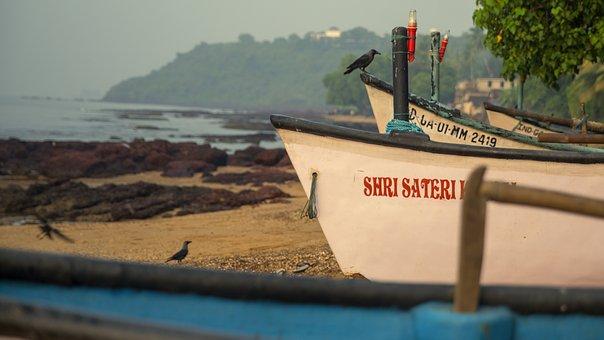 Boat, Fish, Fishing, Crow, Bird, Goa, Beach, Water
