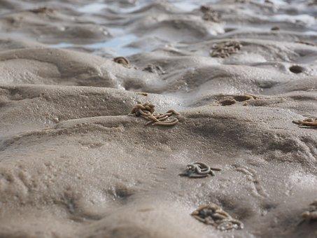 Watt Worm Pile, Lugworm, Worm, Arenicola Marina