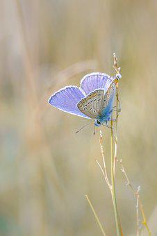 Butterfly, Insect, Macro, Close, Animal, Nature, Color