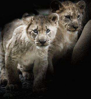 Lion, Young Animals, Africa, Cute, Animal World, Young