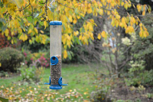 Bird Feeding Tray, Feeding, A Bird Feeder