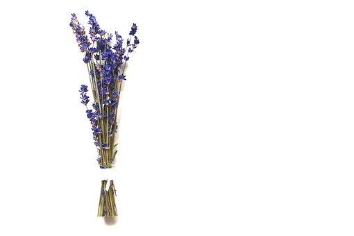 Lavender, Blossom, Bloom, Flower, Nature, Purple, Plant