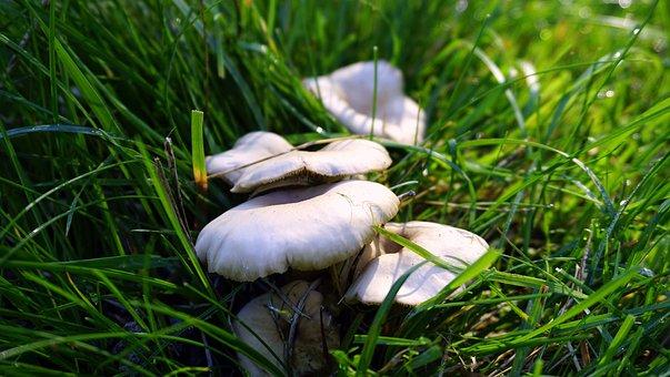 Mushrooms, Fungi, Autumn, Mushroom, Nature, Boletus