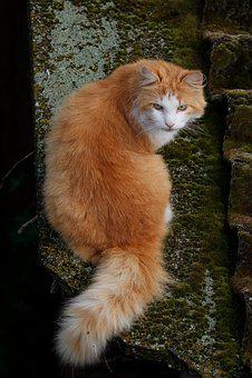 Cat, Red Light, Wild