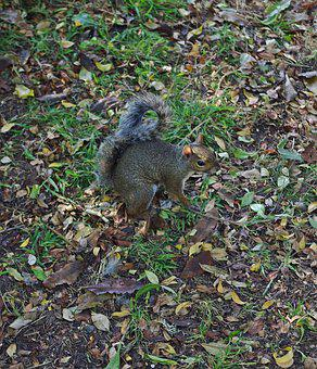 Squirrel, Animal, Nature, Rodent, Forest, Cute, Nager
