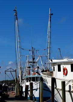Commercial Fishing Nets, Shrimp Nets, Fish, Business