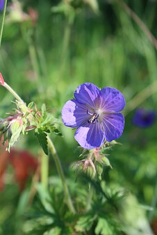 Blue, Flower, Nature, Plant, Garden, Green