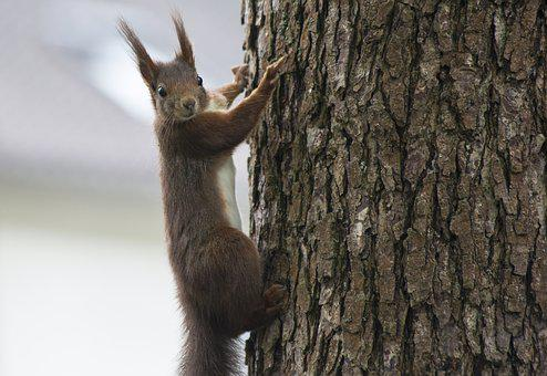 Squirrel, Animal, Nature, Forest, Tree, Forest Life