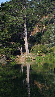 Tree, Park, Mirroring, Water, Sunshine, Green, Nature