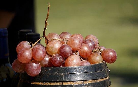 Grapes, Vine, Cluster, Fruit, Red, Food, Healthy