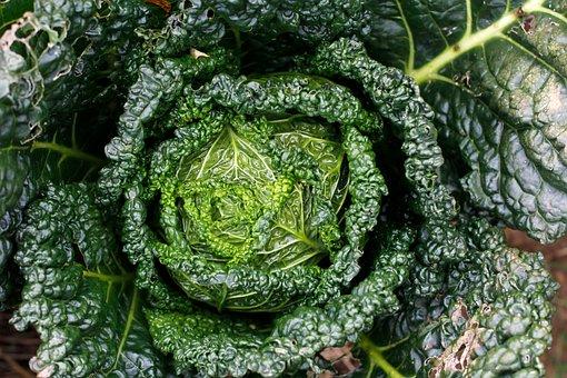 Kale, Bio, Healthy, Frisch, Plant, Herb, Leaves, Green