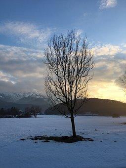 Bavaria, Mountains, Tree, Nature, Landscape, Alpine