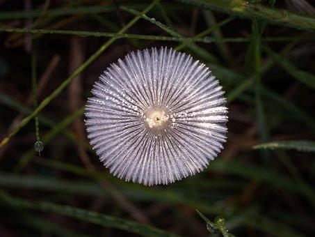 Mushroom, Mushroom Picking, Forest, Nature, Autumn