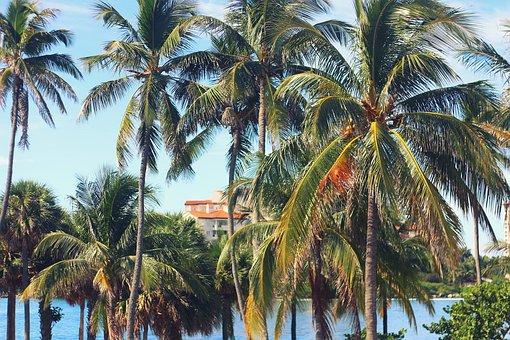 Palm Tree, Resort, Miami, Park, Ocean, Beach