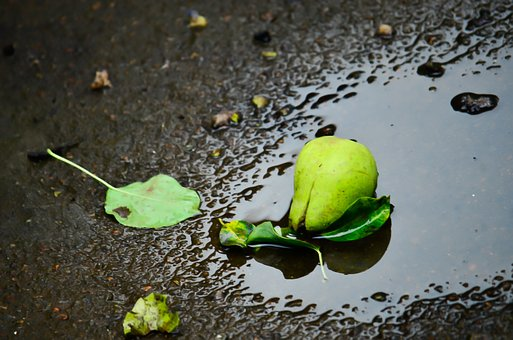 Pear, Puddle, Water, Reflection, Puddles