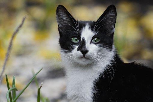Cat, Photo, Pet, Kitten, Eyes, Animal, Look