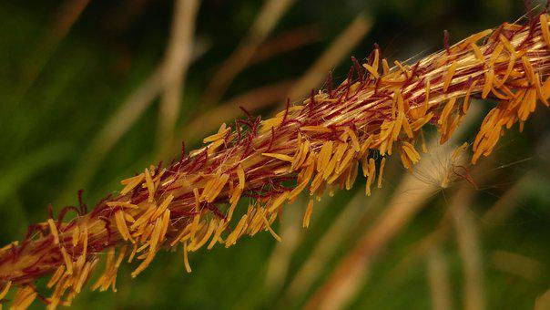 Seeds, Flying Seeds, Reed, Grass, Meadow, Flora, Nature