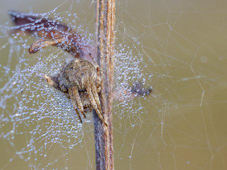Spider, Nature, Cobweb, Insect, Network, Animal, Close