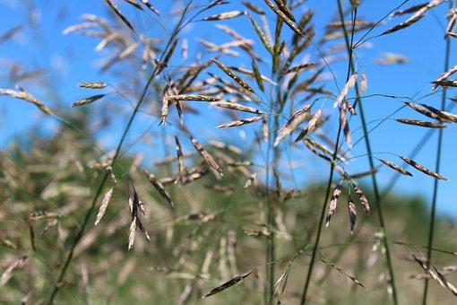 Grass, Green, Nature, High Grass, Meadow, Summer