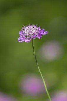 Flower, Field, Pink, Summer, Spring, Stalk, Blossom