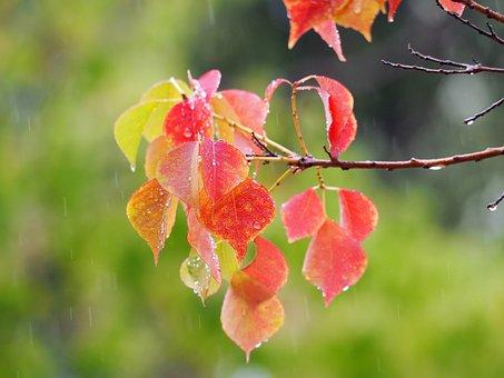Autumn Color, Branch, Foliage, Sunlight, Vibrant, Sunny