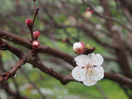Flower, Branch, Blossom, White, Spring, Garden