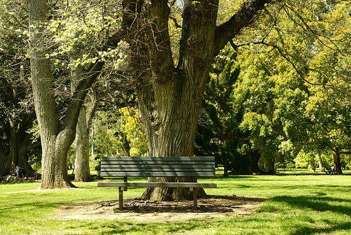 Bench, Tranquillity, Park, Trees, Outdoor, Adelaide