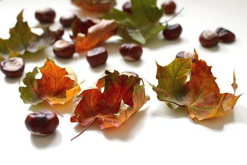 Autumn, Fall Foliage, Fall Leaves, Leaves