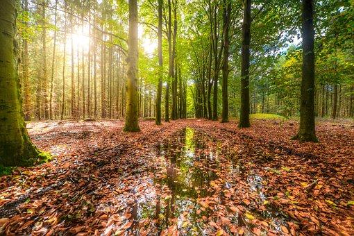 Wood, Rain, Reflection, Sun, Fall, Autumn, Nature