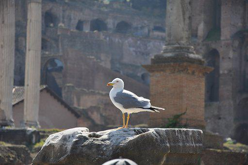 Rome, Italy, Architecture, Bird, Travel, Landmark