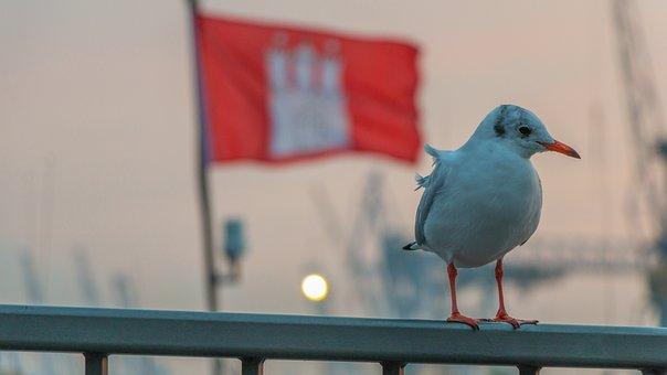 Seagull, Hamburg, Wildlife Photography, Port, Elbe