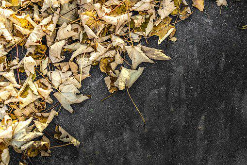 Leaves, Yellow, Stone, Pavement, Sunny, Black, Autumn