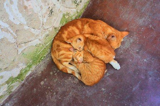 Cat, Zanzibar, Cats, Kitten, Kittens, Striped Cat, Rest