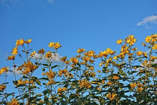Flower, Yellow Flower, Cone Flower, Plant, Leaves